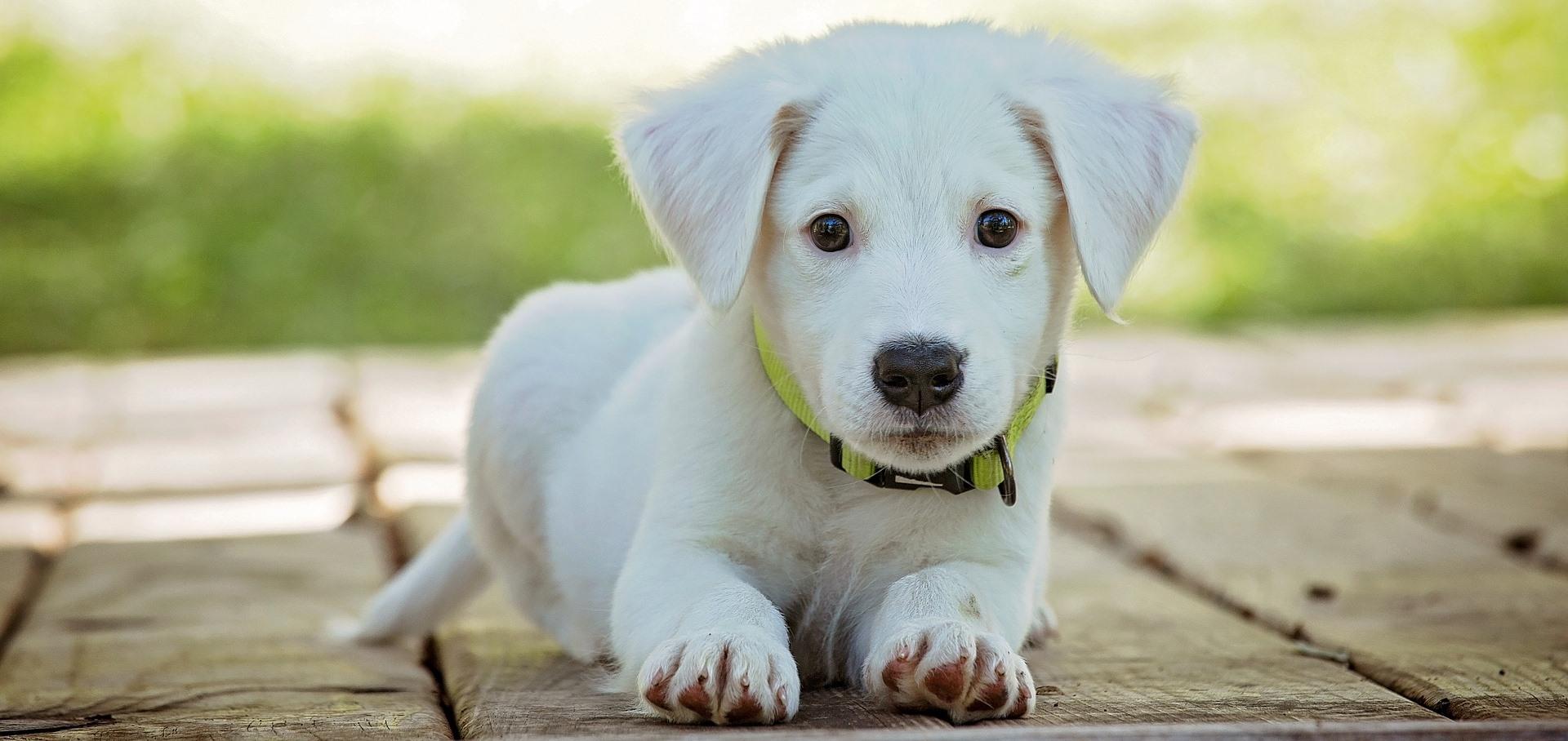 Eigenschaften von Hundemenschen